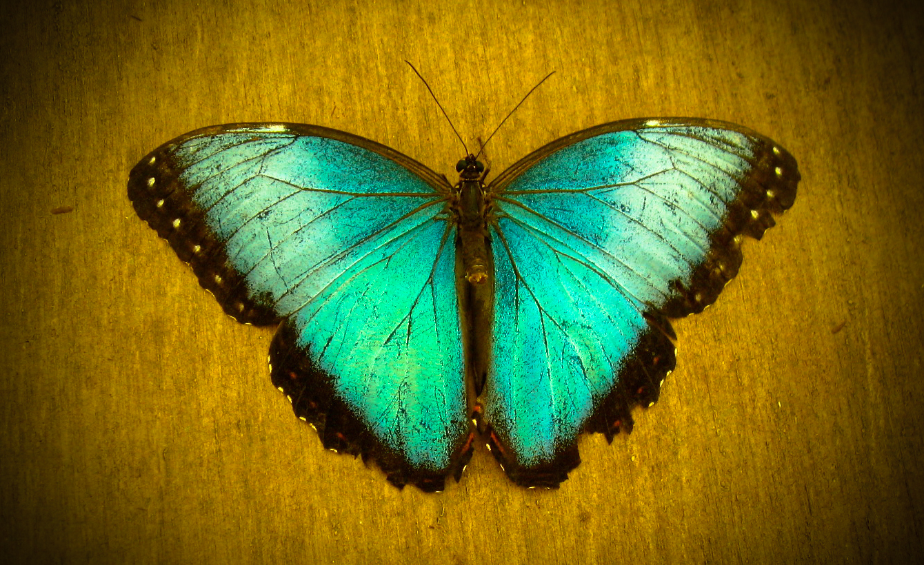 Butterfly Wisdom: Embrace Your Change And Don't Give Up